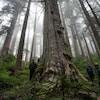Un groupe de personnes autour d'un arbre géant dans une forêt.