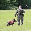 Deux policiers de dos, avec un chien, marchent dans un champ.