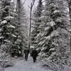 Des gens marchent en forêt, l'hiver.