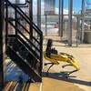 Un robot-chien jaune devant des escaliers.