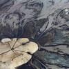 Vue aérienne de boues noires déversées dans un grand bassin de décantation.