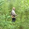 Un travailleur sylvicole est au milieu d'une forêt avec son équipement.