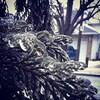 Une branche d'arbre est emprisonnée dans une épaisse couche de glace.