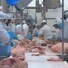 Des employés de l'usine Olymel de Yamachiche découpent des pièces de porc.