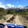 Un attelage de chiens en été en montagne.