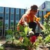 Une jardinière de la Ville du Grand Sudbury plante des fleurs près d'une terrasse.