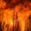 Une forêt flambe à la suite d'un incendie contrôlé allumé par Sustainable Resource Alberta en 2009.