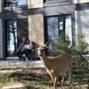 Un cerf se trouve devant un établissement.