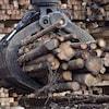 Des billes de bois lors d'opérations forestières