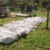 Plusieurs corps sont au sol et recouverts de draps blancs.