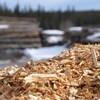 Une photo prise de près de nombreux copeaux de bois dans une scierie.