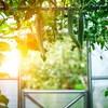 Le soleil perce les vitres d'une serre dans laquelle pousse des légumes.