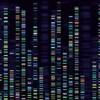 Représentation visuelle d'un genome.
