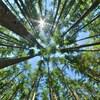 Des arbres d'une forêt sont pris en photo.