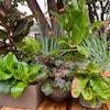 Ce jardin d'Edmonton a une ambiance tropicale en regroupant des plantes capables de survivre au climat de l'Alberta.