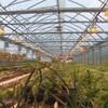 Vue de l'intérieur d'une serre remplie de pousses vertes, de lampes et de ventilateurs.