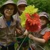 Lors d'une chasse au trésor au parc national de la Jacques-Cartier, Arthur L'aventurier propose aux enfants d'explorer la vie des papillons. Les aventuriers expérimentent la trompe des papillons qui leur permet de butiner les fleurs. Ils découvrent le cycle de vie de ces insectes volants de même qu'un magnifique trésor de la nature.