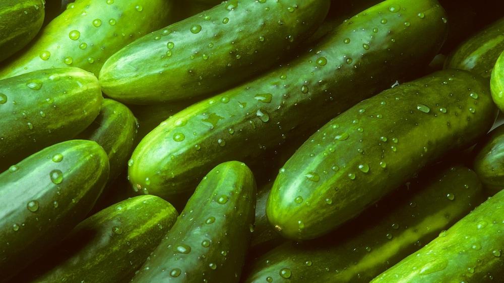 Des petits concombres frais, avec une pelure verte.