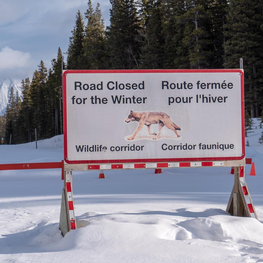 Une grande affiche plantée dans la neige en forêt indique que la route est fermée pour l'hiver. Corridor faunique. On y voit l'image d'un loup.