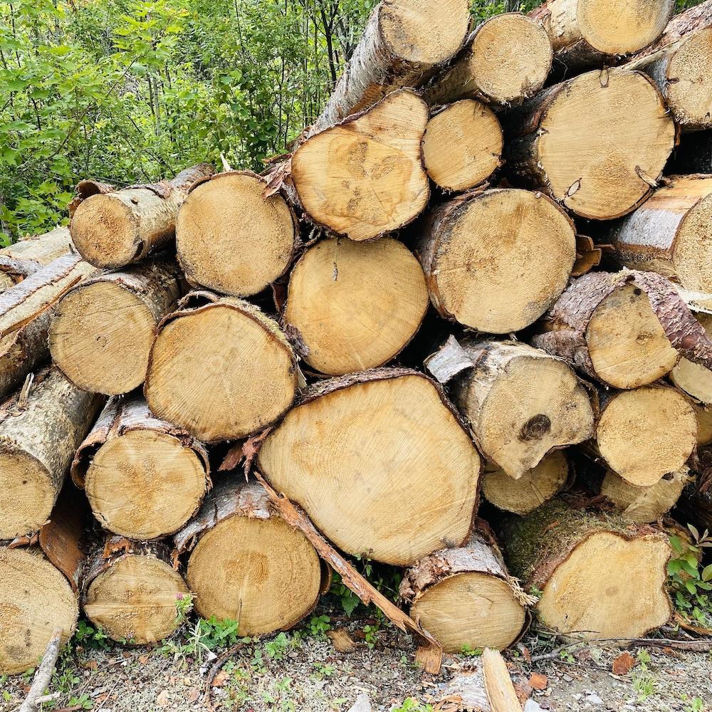 Une pile de billots de bois.