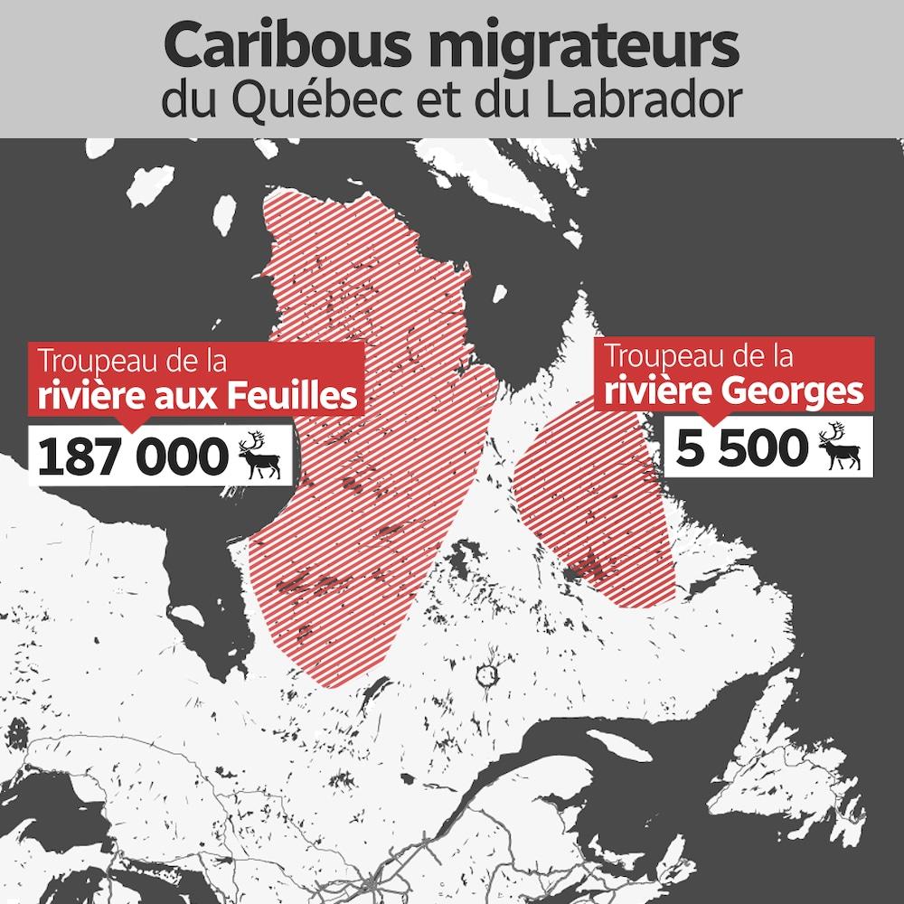 Une carte indiquant les régions occupées par les deux grands troupeaux de caribous migrateurs au Québec.