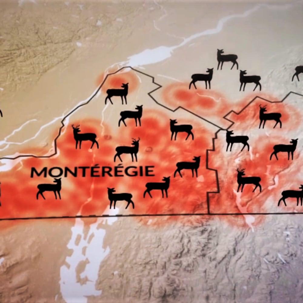 Carte illustrant la présence des cerfs dans le sud du Québec.