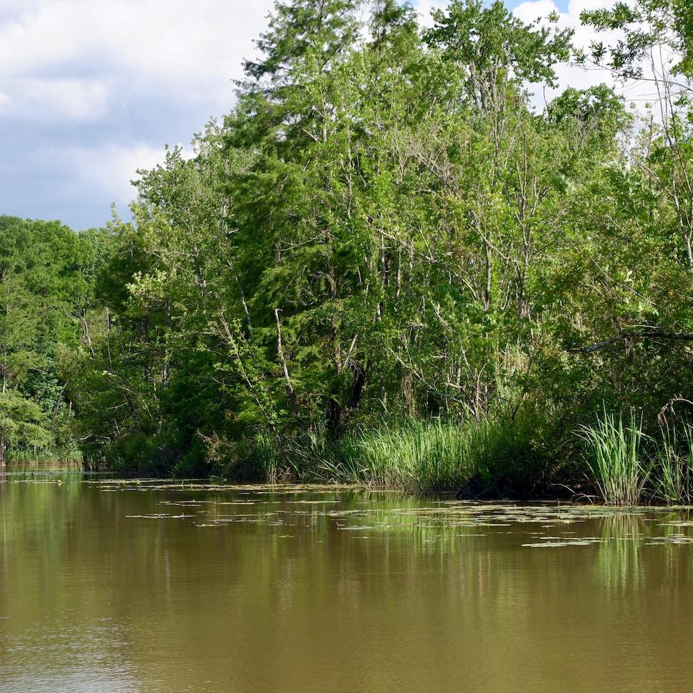 La rivière Mobile, entourée de bayous, où l'épave du Clotilda a été retrouvée.