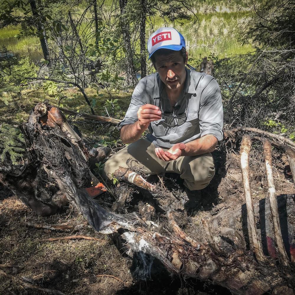 Daniel inspecte une carcasse d'orignal.