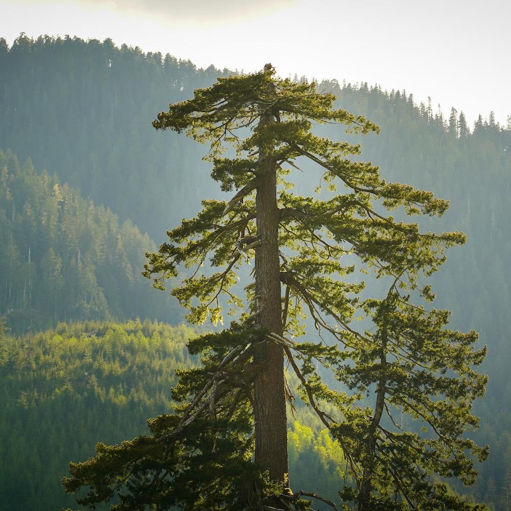 Cime d'un arbre dans un paysage forestier.