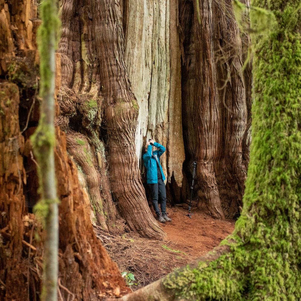 Une personne au pied d'un arbre géant.