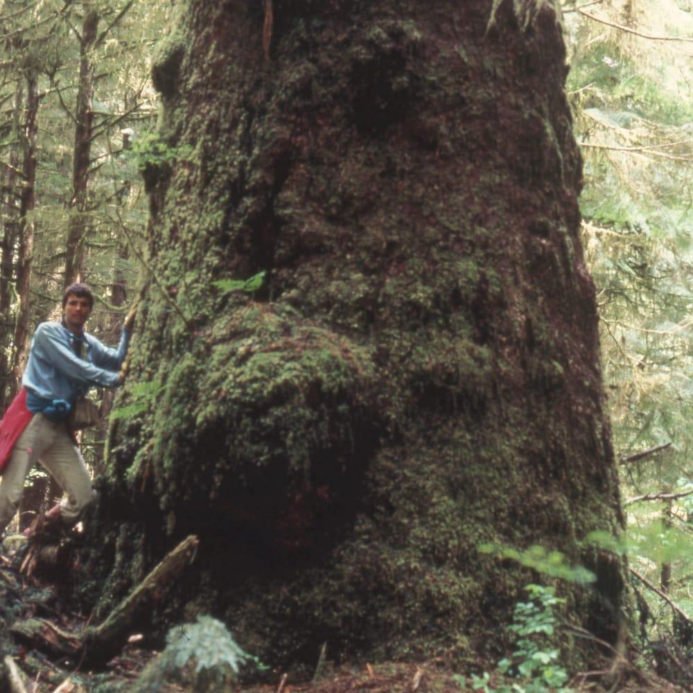 Randy Stoltmann au pied d'un arbre géant.