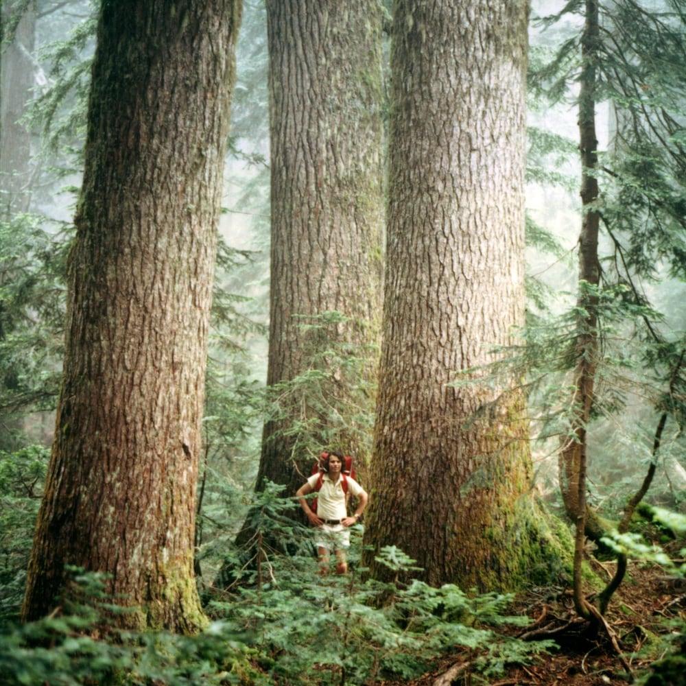 Randy Stoltmann au pieds d'arbres géants.