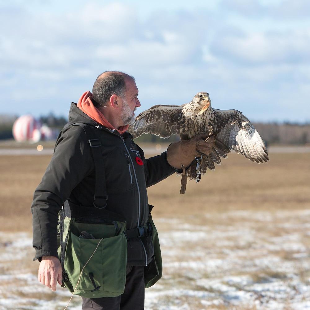 Le faucon est posé sur la main du fauconnier.