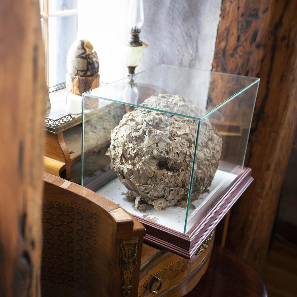 Le nid de guêpes qui contient les cendres a été placé sous un cube de verre.
