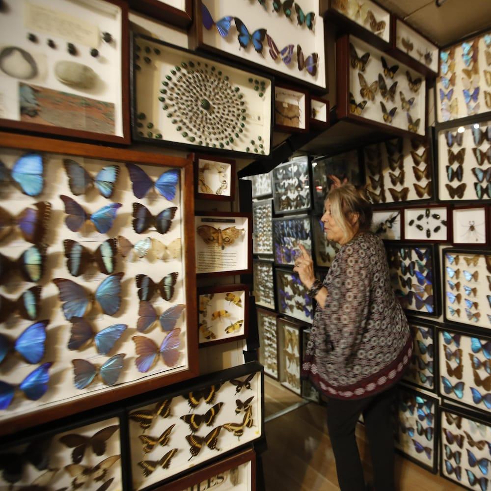 Suzanne Schiller entourée de cadres de papillons, qui occupent tous les murs du sol au plafond.