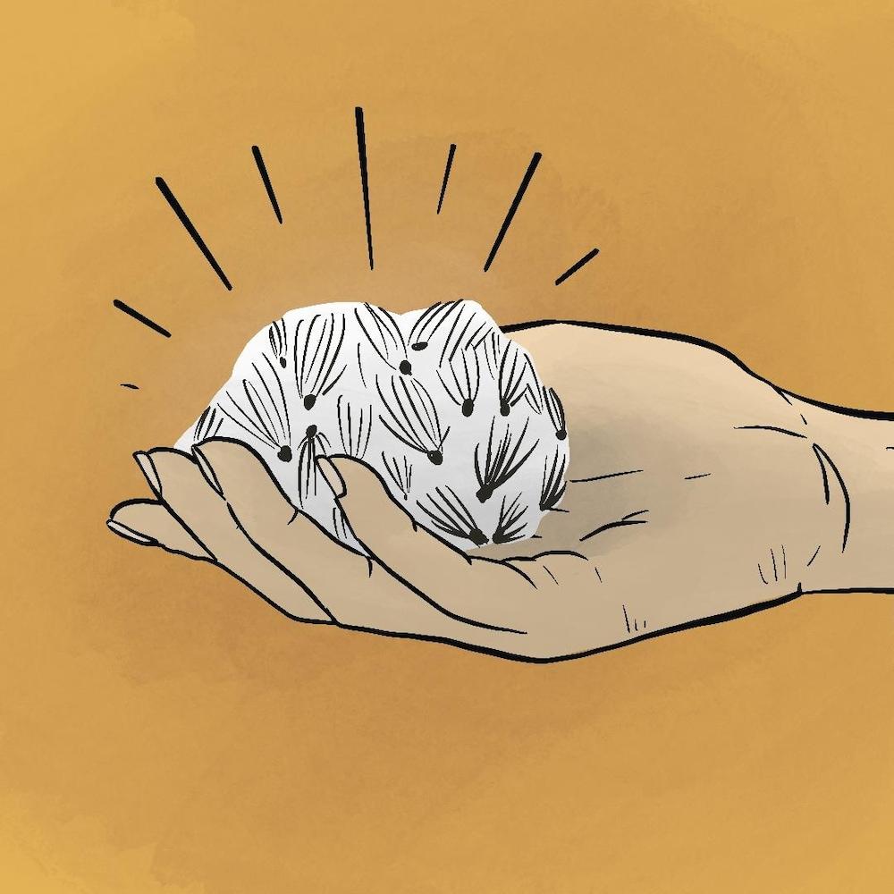 Illustration d'une main qui tient une boule d'asclépiade blanche.