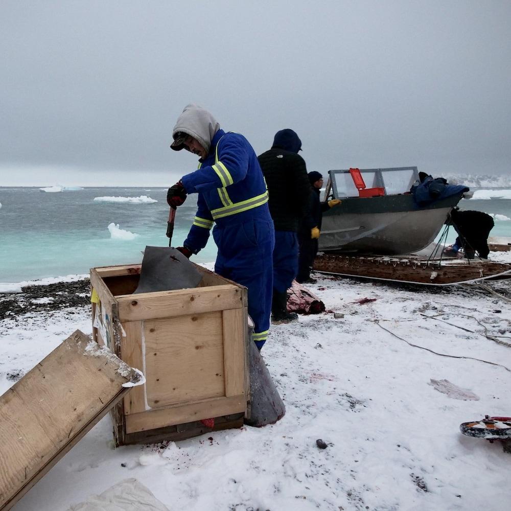 Un pêcheur dépose des morceaux de beluga dans une caisse en bois, sur une rive, pendant que d'autres les découpent, sur la rive, près d'une chaloupe.