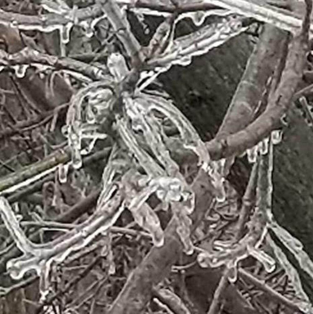Un arbre dépouillé de feuilles est couvert de verglas.