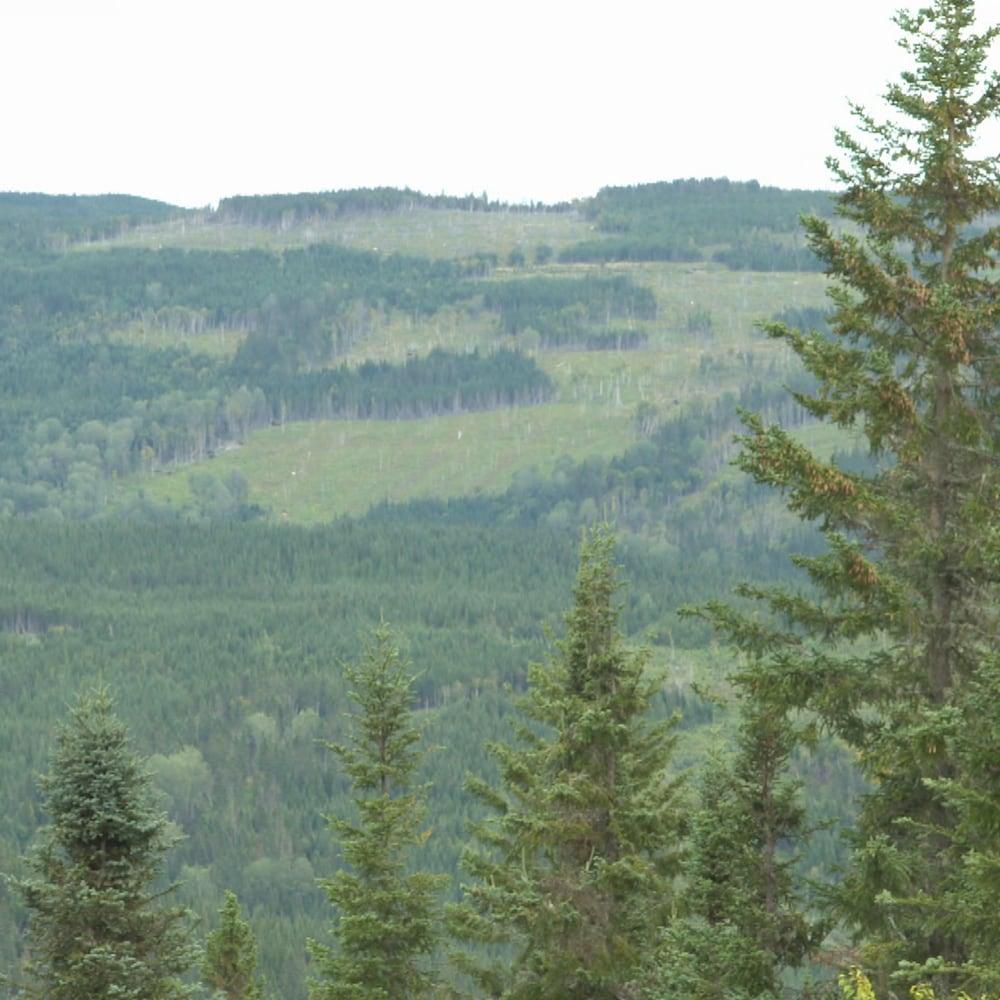 La forêt Montmorency à perte de vue.