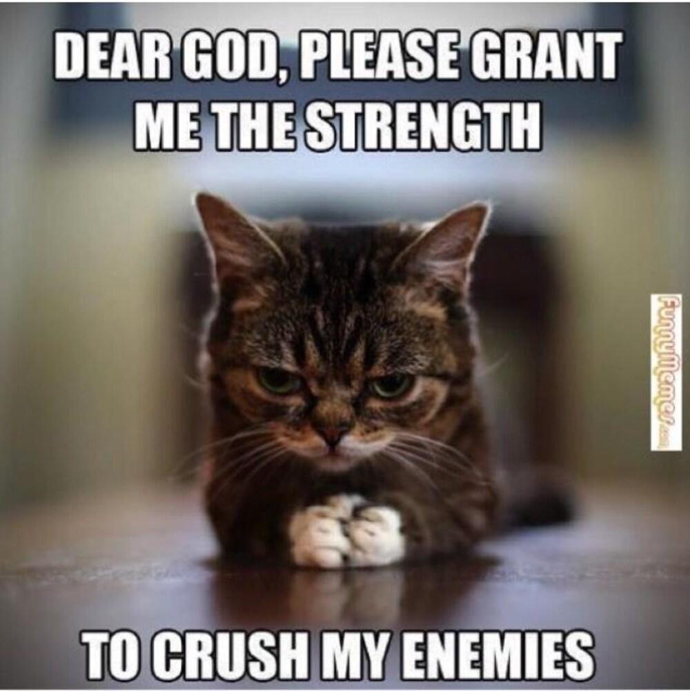 Image du chat accompagnée de la mention : « Dear God, please grant me the strength to crush my enemies ».