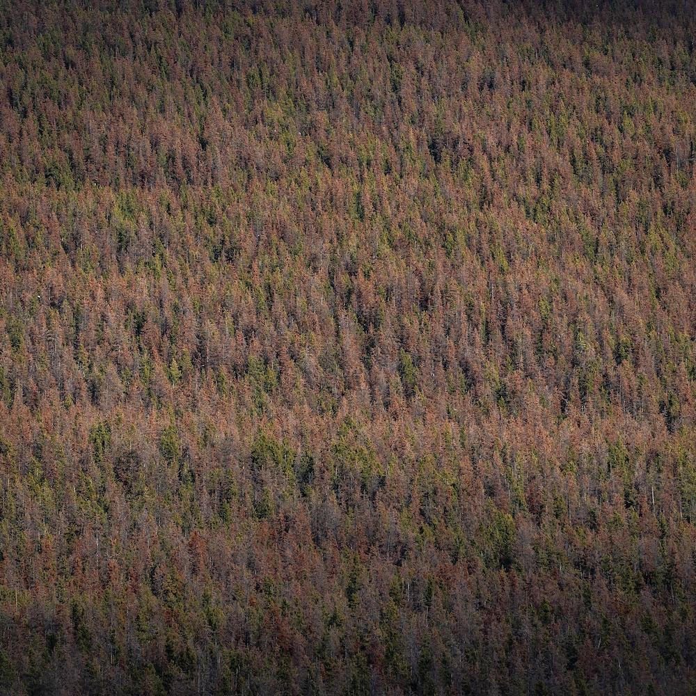 Une forêt avec des tons orangés.