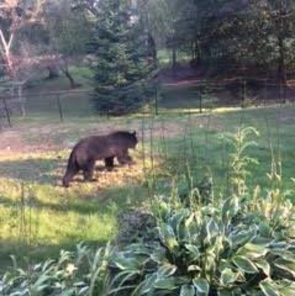 L'ours déambulait dans le quartier Lewisville de Moncton avant d'être abattu.
