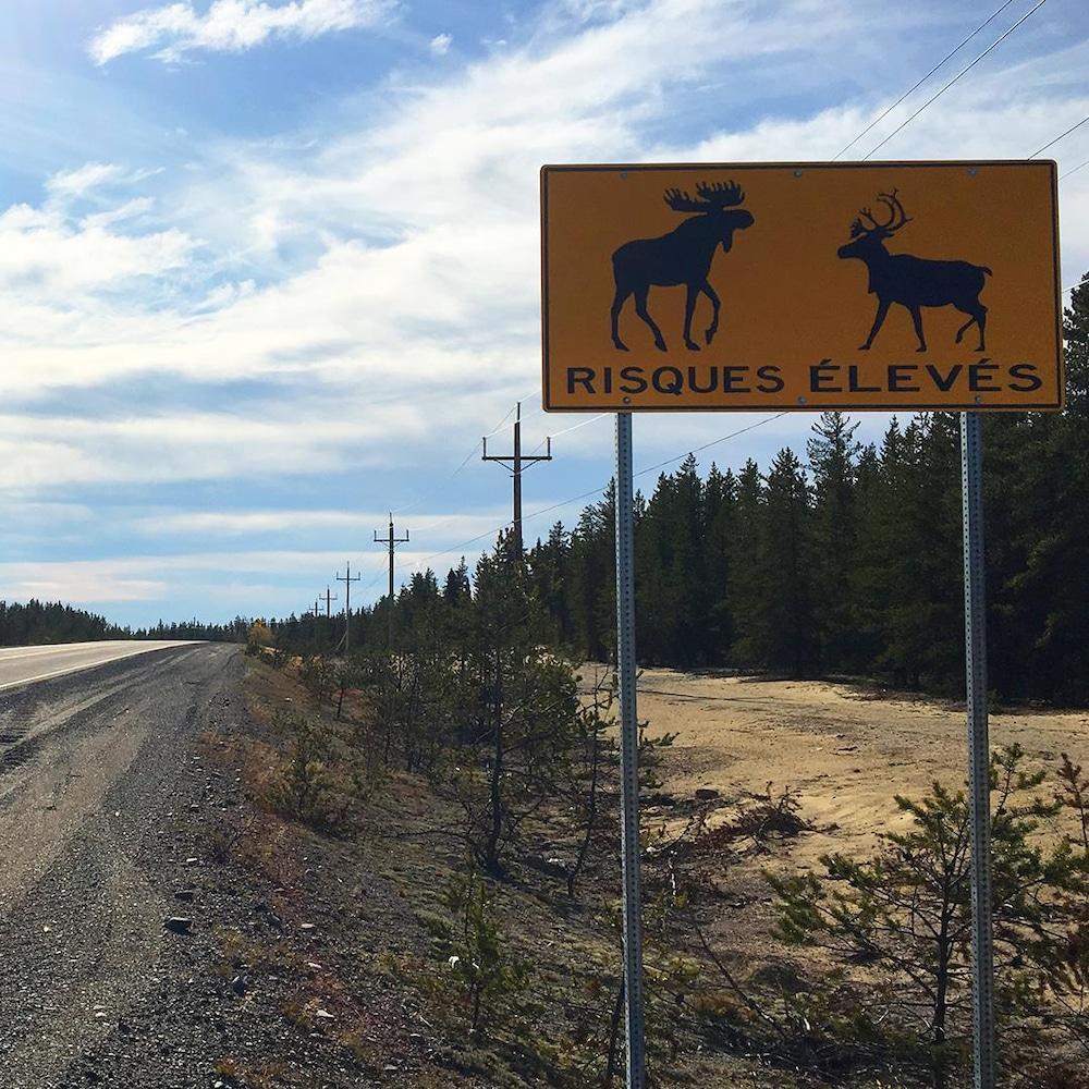 Un panneau de signalisation indiquant la présence d'orignaux et de caribous.