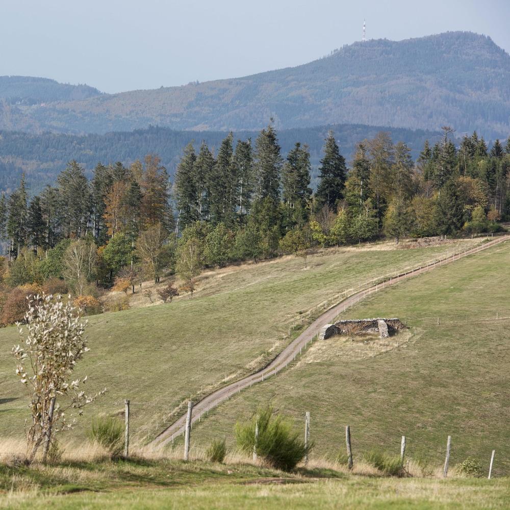 Un champ cultivé adossé à une forêt.
