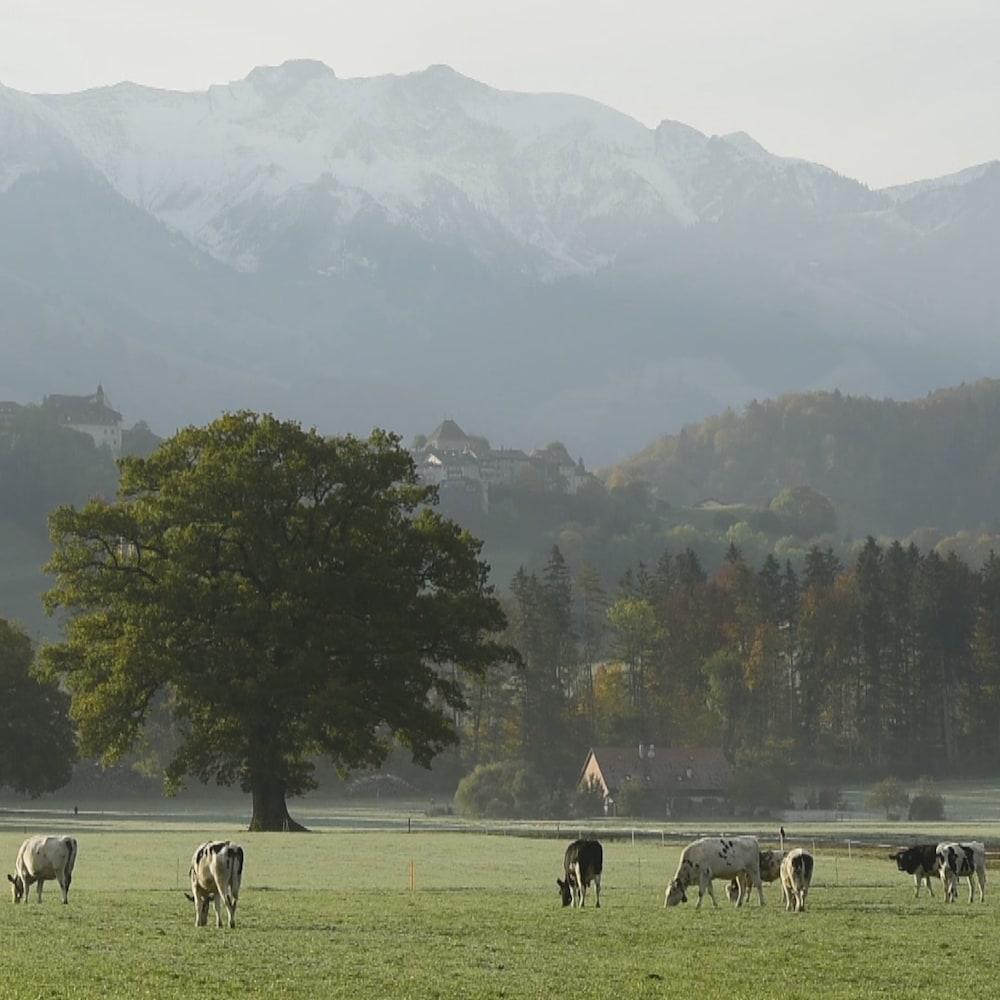 Vue des montagnes avec des vaches et un gros arbre en plein milieu d'un pré.