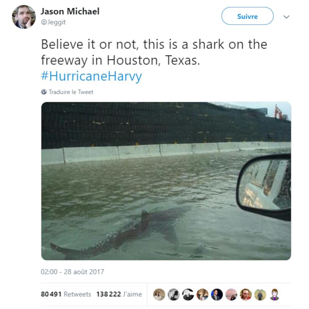 Un requin dans l'eau après une inondation.