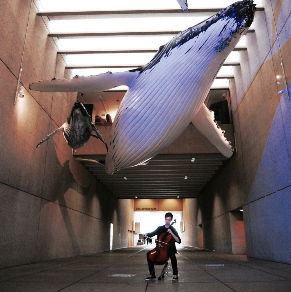 Rob Knaggs avec son violoncelle électrique entouré de sculpture de baleines