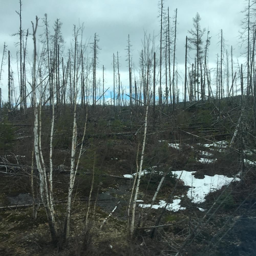 Des arbres calcinés sur le bord de la voie ferrée.