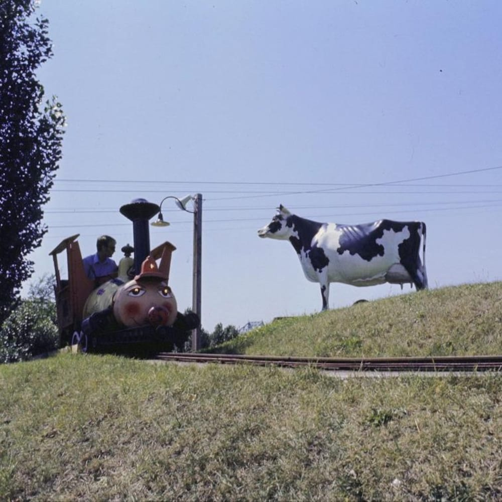 Le premier wagon du manège de train s'approche d'un champ avec une vache motorisée.