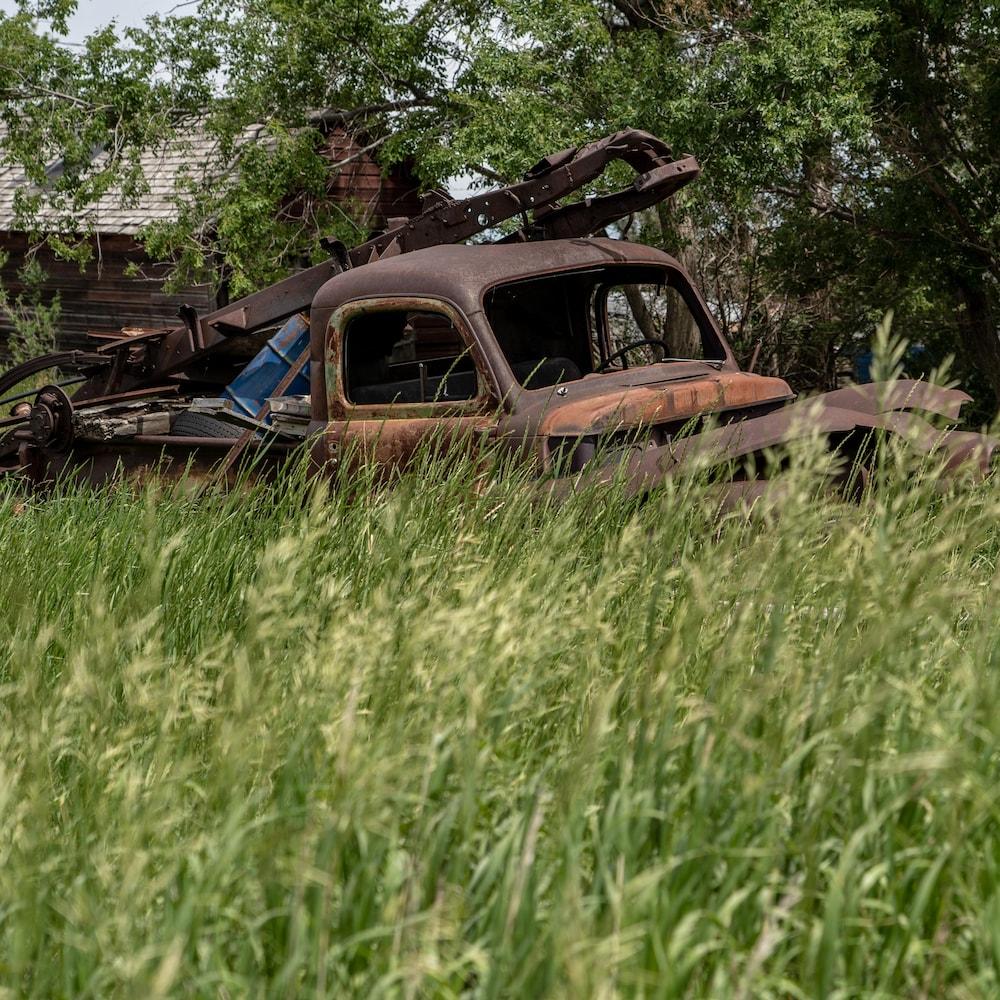 Un vieux camion rouillé dans une cour de hautes herbes.